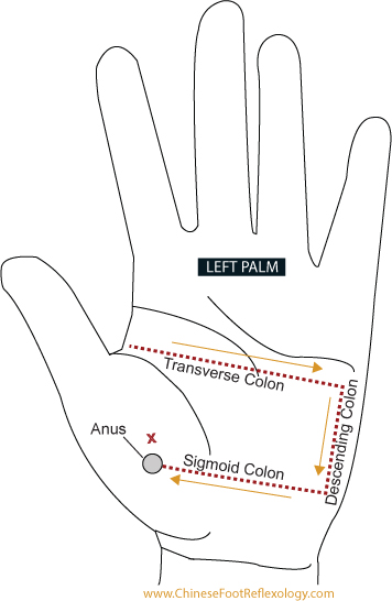 LeftHandPalm