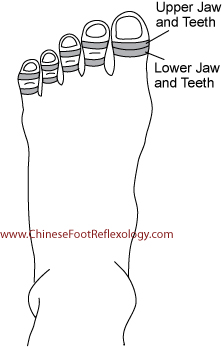 reflexology teeth, reflexology point teeth