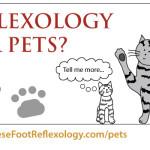 cat reflexology, dog reflexology, energy healing for animals