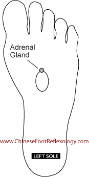 reflexology adrenal glands