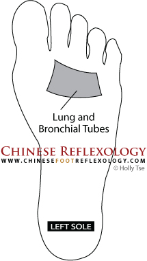 Chinese Reflexology point for the lungs